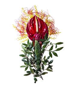 floresmax-3